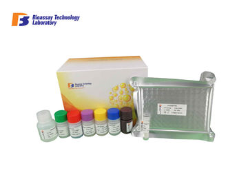Endothelin 1 Rat ELISA Assay Kit، Mouse ELISA Test Kit مع دقة عالية وخصوصية